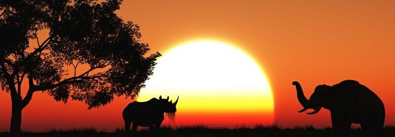 3D african landscape at dusk
